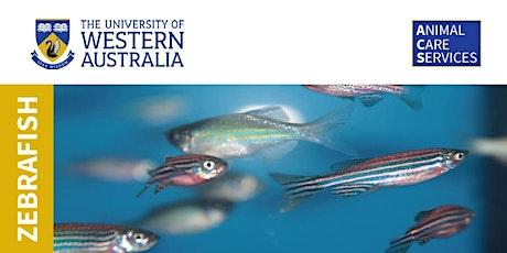 Zebrafish presentation tickets