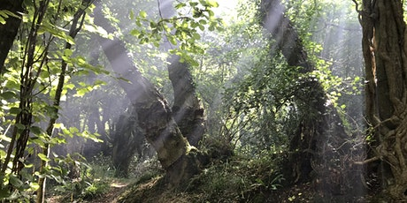 Forest Bathing Walk - an Introduction tickets