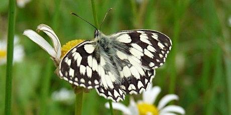 Summer Walk for Butterflies at Fryent Country Park near Kingsbury tickets