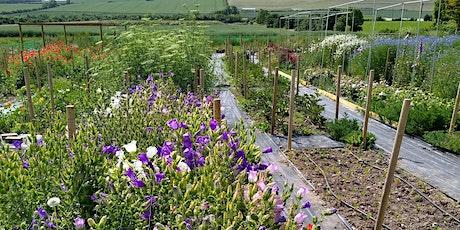 Nature's Posy Flower Farm Tour tickets
