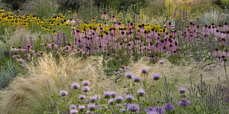 Climate Change, Loss of Biodiversity: Our Responses through Urban Planting tickets