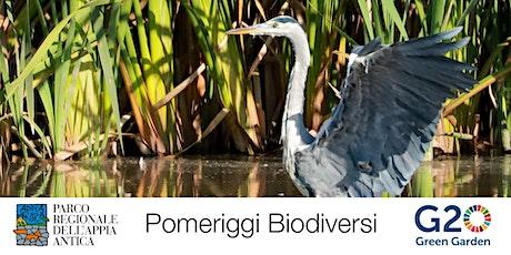 G20 Green Garden - Passeggiata ornitologica tickets