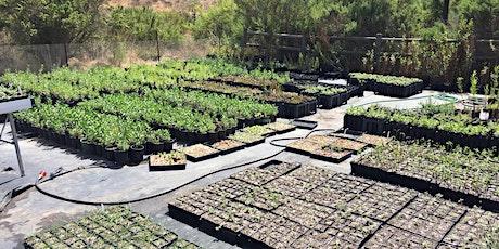 FREE PLANT FRIDAYS! - California Native Plant Nursery Volunteering tickets