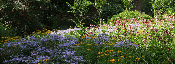 Climate Change, Loss of Biodiversity: Our Responses through Urban Planting image