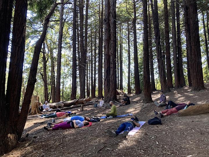 Hike & Meditation in Presidio Forest image