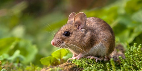 Small Mammals Survey in the Heart of England Forest - BioBlitz 2021 tickets