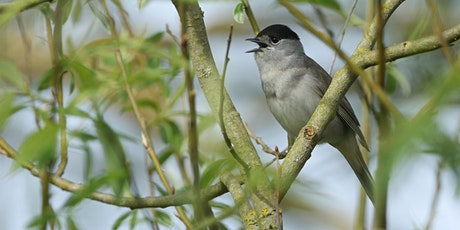 Bird Survey in the Heart of England Forest - BioBlitz 2021 tickets