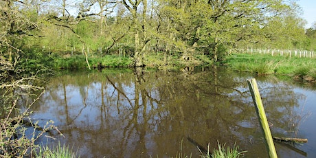 Pond Survey in the Heart of England Forest - BioBlitz 2021 tickets
