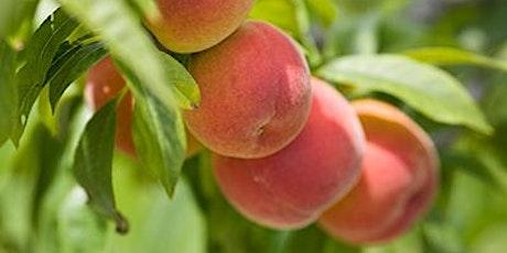 9-11-21The Basics of Backyard Fruit Growing tickets
