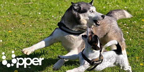 Natura e animali (11+) Scopriamo il cane e le razze canine. Max 30 part. biglietti