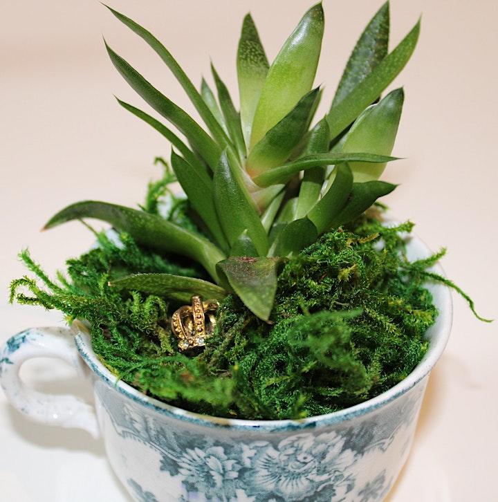 Make Your Own Teacup Fairy Garden image