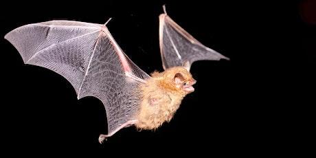 Bat Walk at the Ridgewood Reservoir tickets