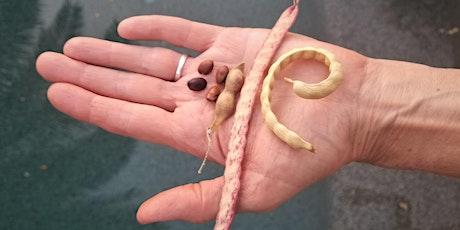 Desert Bean Tree Harvest Party tickets