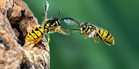 Get Cumbria Buzzing! Pollinator identification in the field tickets