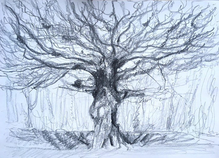 Drawing Trees image