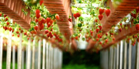 The Buddha in the Garden: Growing our own food tickets
