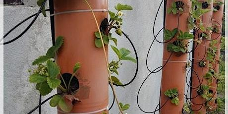 Taller de Jardinería I entradas