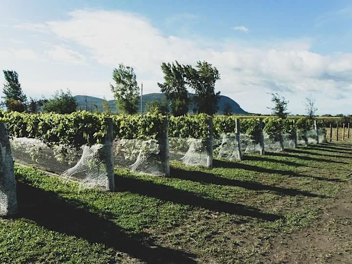 Image de Visite du vignoble et dégustation