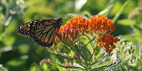 Native Landscaping for Birds & Other Wildlife Species tickets