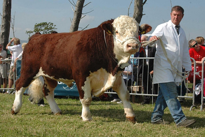 Southern District Agricultural Show image