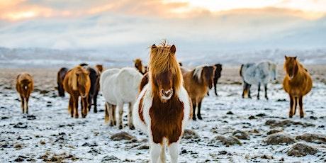 Winter Wonderland: Iceland December 2021 tickets