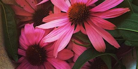 Harvesting the Summer Garden for Winter Remedies tickets