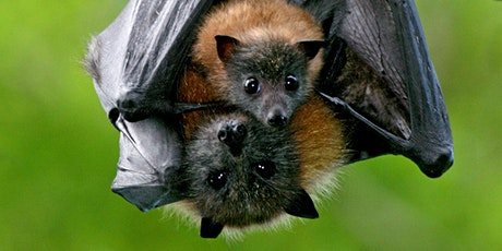 Meet a Bat for National Science Week tickets