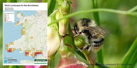 Webinar: WELSH LANDSCAPES for RARE BUMBLEBEES tickets