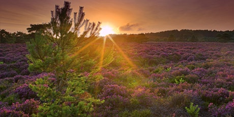 Heather Walk at Budby South Forest tickets
