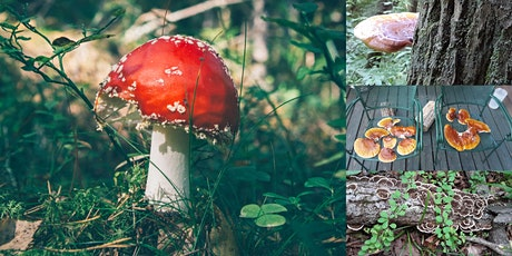 Exploring the Mushrooms of Central Park tickets