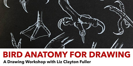 Bird Anatomy for Drawing: A Drawing Workshop with Liz Clayton Fuller tickets