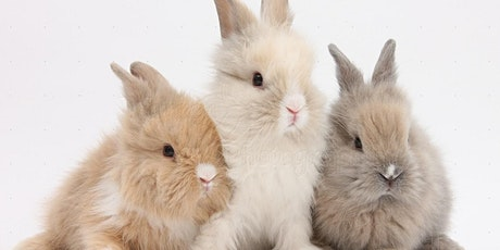 Hoppy Hour: Meditation with Bunnies at Lost Boy Cider tickets