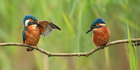 Kingfisher Trail Group Walk - Bolton tickets