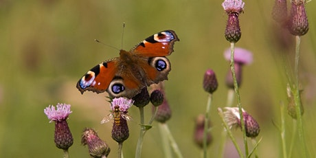 Butterfly Survey - Ousel Nest Quarry, Bolton tickets