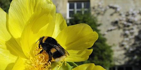 Planting perennials for pollinators tickets