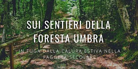 Sui sentieri della Foresta Umbra | Trekking Leggero biglietti