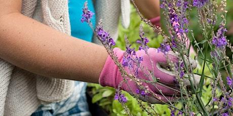 Wildlife gardening for pollinators tickets