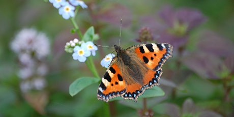 Common butterflies of Cumbria Tickets