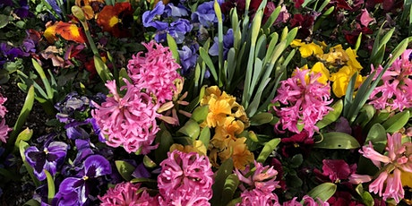 Spring Blooming Bulbs tickets