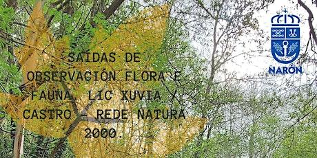 SAÍDAS DE OBSERVACIÓN FLORA E FAUNA. LIC XUVIA / CASTRO - REDE NATURA 2000. entradas