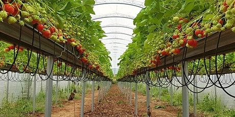 Bourne Valley PYO  including The Strawberry Experience , Fun Park & Trails tickets
