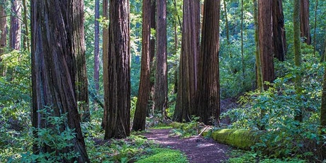 Welcome picnic in the redwoods tickets