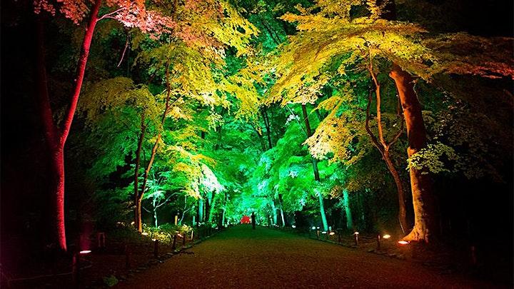 LIGHT UP THE NIGHT 2.0 image
