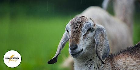 NamastHay Goat Yoga to Benefit HUMANE ACTION Pittsburgh (HAP) tickets