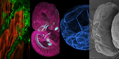 13th ANZSCDB Victorian Cell and Developmental Biology Meeting tickets