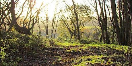 Bat Walk led by Norfolk Bat Group - West Earlham Woods tickets