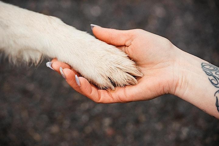 Animal Essential Touch Methode - Zertifizierungskurs: Bild