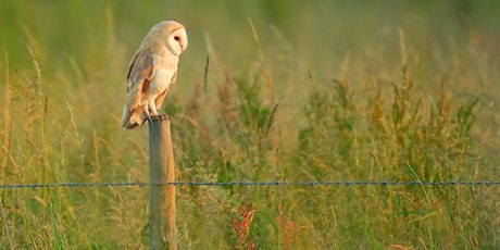 University of Cambridge Only - Online Introduction to Raptor ID tickets