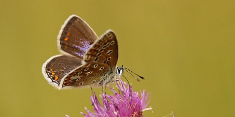 Online Introduction to Butterfly ID Tickets