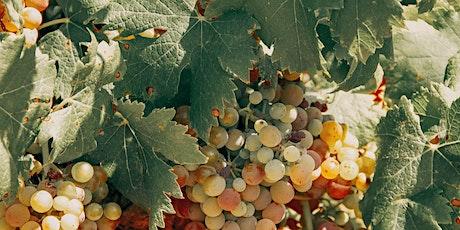 Online Tasting :: Lillet Vermouth tickets